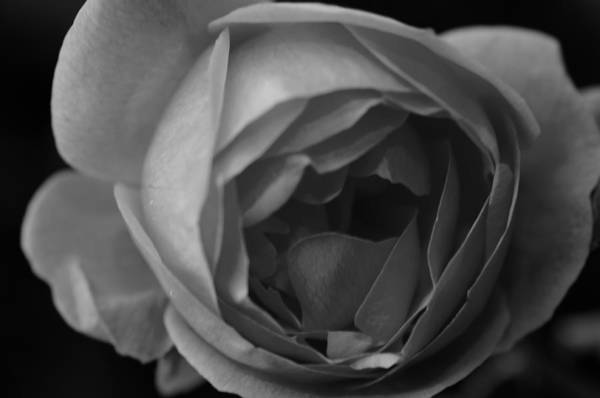 Photograph - Flower Within by Miguel Winterpacht