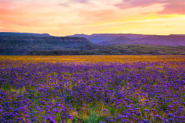 Photograph - Flowered Sunset by Rick Wicker