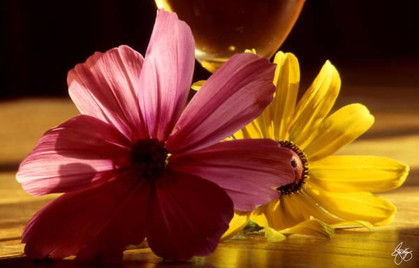 Photograph - Flowerheads In The Sun by Wayne King