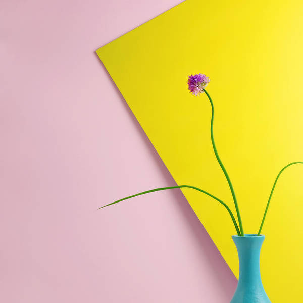 Photograph - Flowering Chive Blossom by Juj Winn