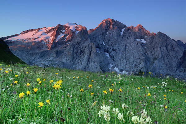 Friuli Photograph - Flowering Meadow In Front Of Marmolada by Andreas Strauss / Look-foto