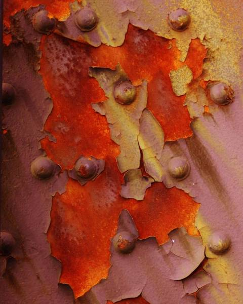 Photograph - Flowering Of Rust by Charles Lucas