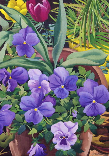 Wall Art - Photograph - Flowerpots With Pansies, 2007 Wc On Paper by Christopher Ryland
