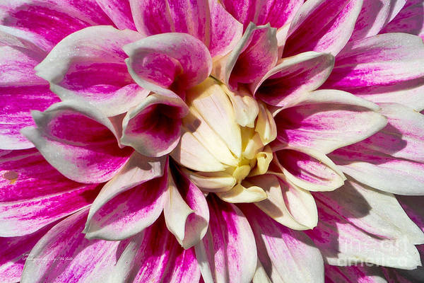 Photograph - Flowers 000 by Ms Judi