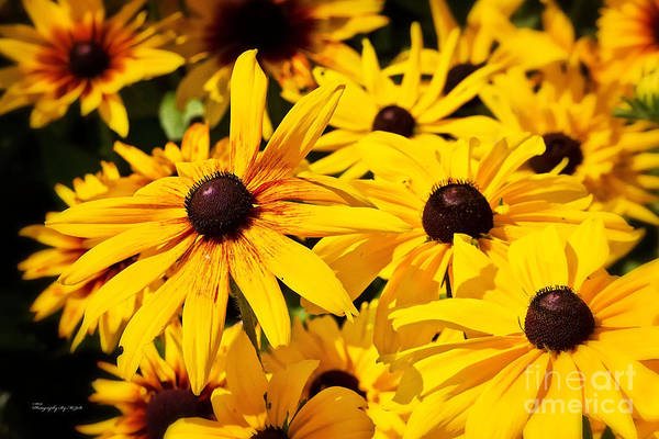 Photograph - Flowers 001 by Ms Judi