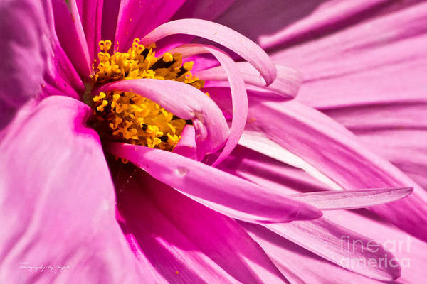 Photograph - Flowers 004 by Ms Judi