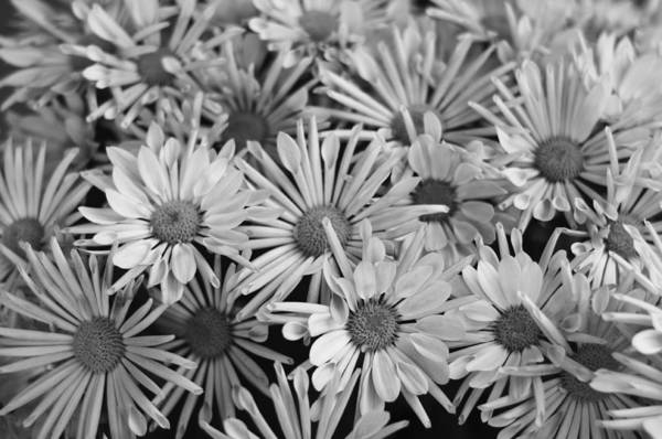 Photograph - Flowers All Around by Miguel Winterpacht
