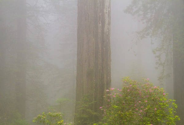 Redwood City Wall Art - Photograph - Flowers And Giants by Kunal Mehra