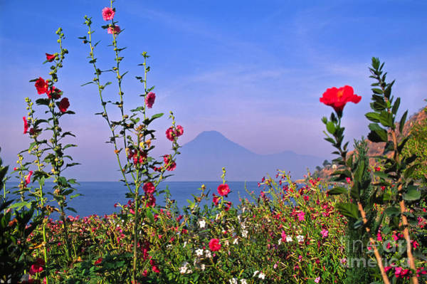 Photograph - Flowers And Volcano by Thomas R Fletcher