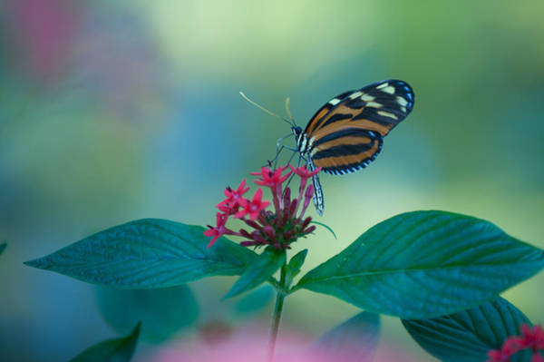 Photograph - Flowers And Wings by Paul Johnson