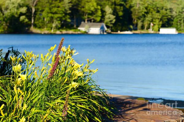 Photograph - Flowers At Lake Shore by Les Palenik