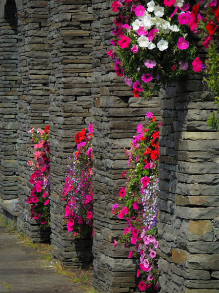 Photograph - Flowers At Liscannor Rock Shop by James Truett