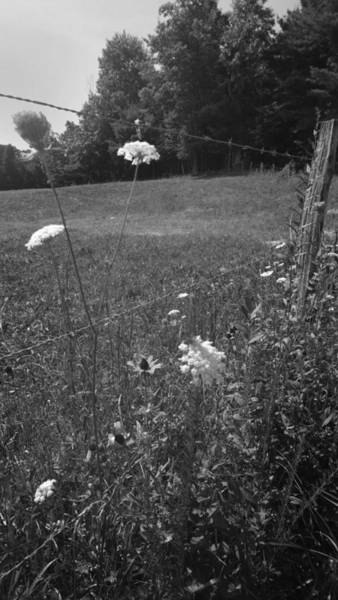 Photograph - Flowers By A Barbed Wire Fence by Kelly Hazel