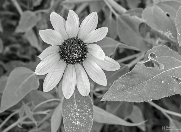 Photograph - Flowers by Elaine Malott