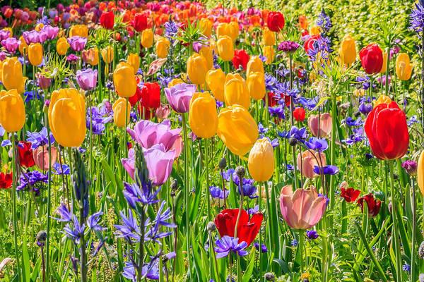 Photograph - Flowers Everywhere by Susan Leonard