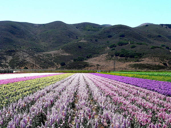 Photograph - Flowers Fields And Mountains by Jeff Lowe