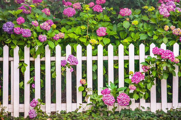 Photograph - Flowers - Floral - White Picket Fence by Gary Heller