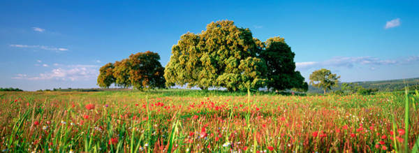 Wall Art - Photograph - Flowers In A Field, Andalusia, Spain by Panoramic Images