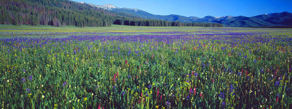 Peacefulness Photograph - Flowers In A Field, Salmon, Idaho, Usa by Panoramic Images