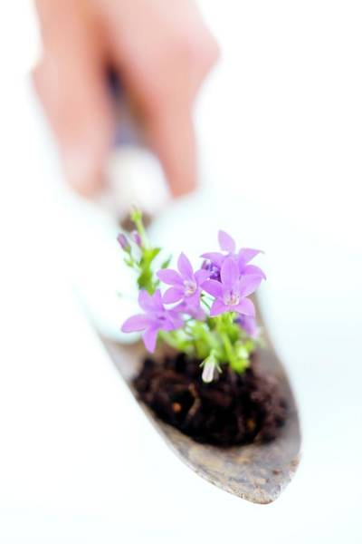 Trowel Photograph - Flowers In A Trowel by Ian Hooton/science Photo Library