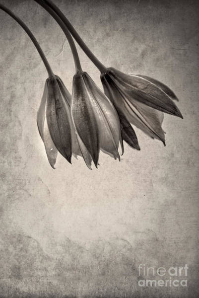 Wall Art - Photograph - Flowers In Black And White by HD Connelly