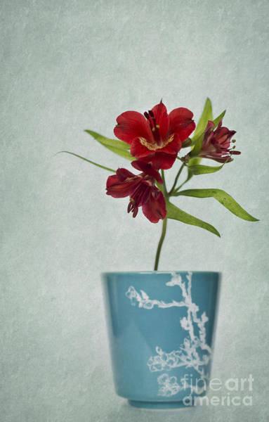 Photograph - Flowers In Blue Vase by David Lichtneker