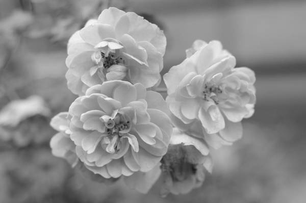 Photograph - Flowers In December by Miguel Winterpacht