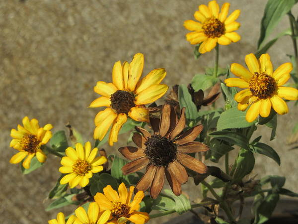 Photograph - Flowers In Fall 1 by Anita Burgermeister