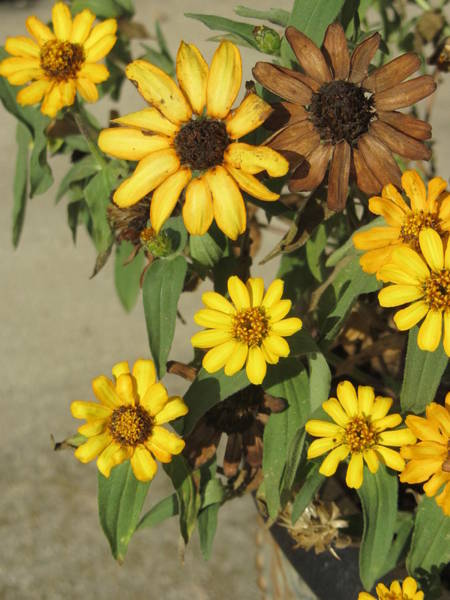 Photograph - Flowers In Fall 2 by Anita Burgermeister