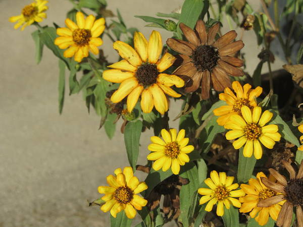 Photograph - Flowers In Fall 3 by Anita Burgermeister