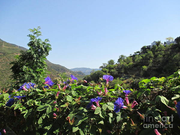 Photograph - Flowers In Istan by Chani Demuijlder