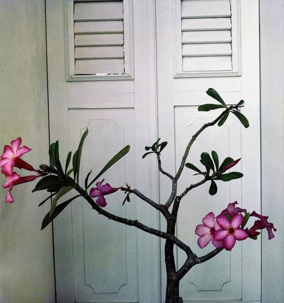 Shutters Photograph - Flowers In Jean Schlumberger's Home by Horst P. Horst