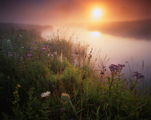 Photograph - Flowers In The Fog by Ray Mathis