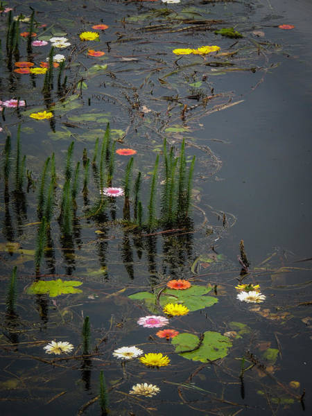 Photograph - Flowers In The Markree Castle Moat by James Truett