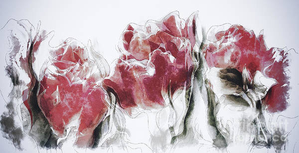 Wall Art - Painting - French Country Roses by Shanina Conway