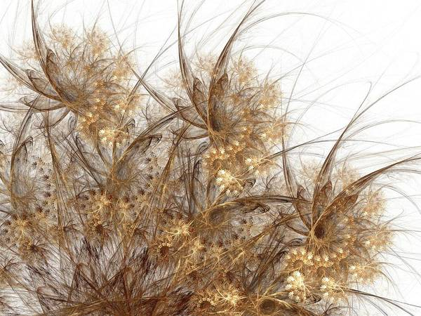 Feathery Photograph - Flowers by Laguna Design