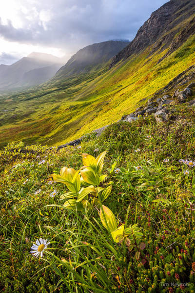 Photograph - Flowers-n-foothills by Tim Newton