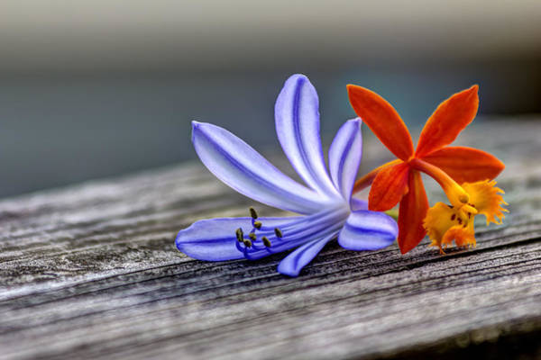 Handrail Photograph - Flowers Of Blue And Orange by Marvin Spates