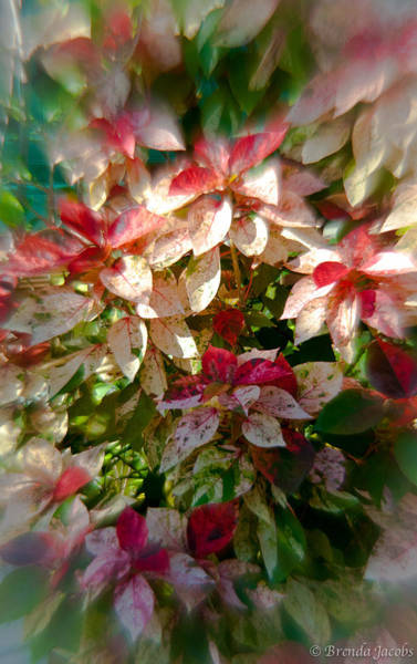 Photograph - Flowers Of Key West by Brenda Jacobs