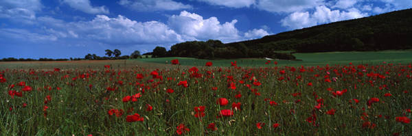 Wall Art - Photograph - Flowers On A Field, Staxton, North by Panoramic Images