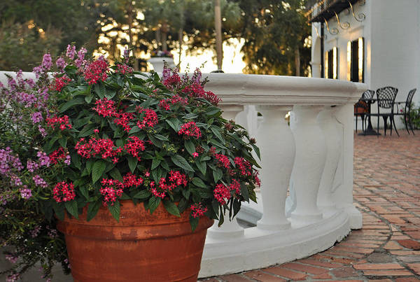 Photograph - Flowers On Jekyll Island Crane Cottage Patio by Bruce Gourley