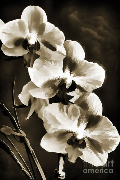 Painting - Flowers Painting In Black And White Sepia 3180.01 by M K Miller