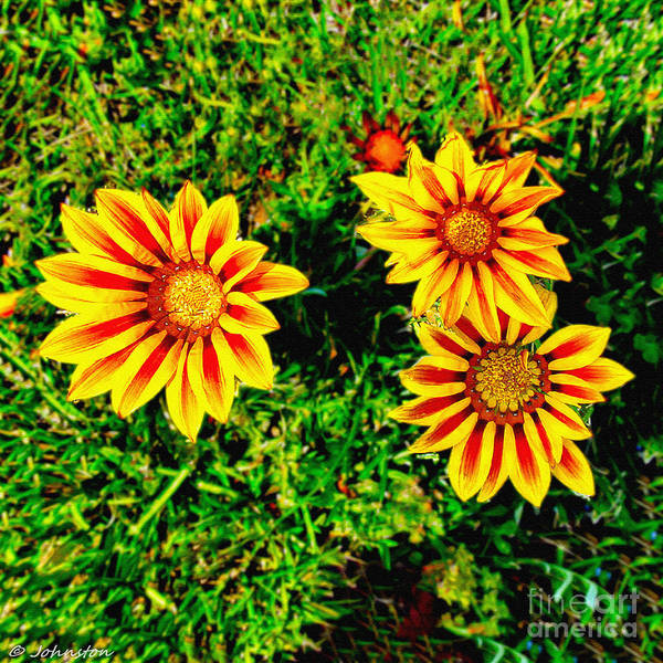 Photograph - Flowers Thousand Trails  by Bob and Nadine Johnston
