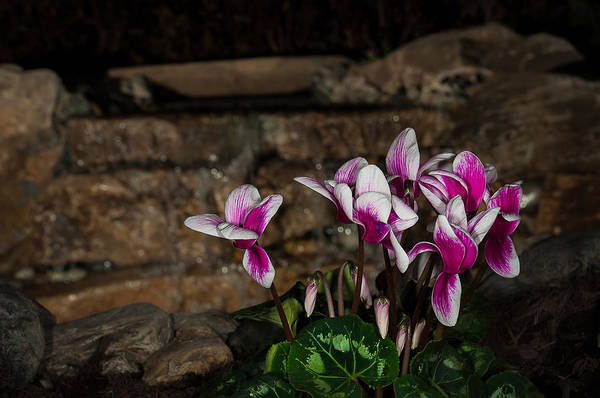 Photograph - Flowers With Waterfall Backdrop by Len Romanick