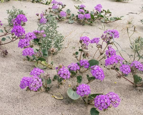 Flowery Sand-dunes Art Print