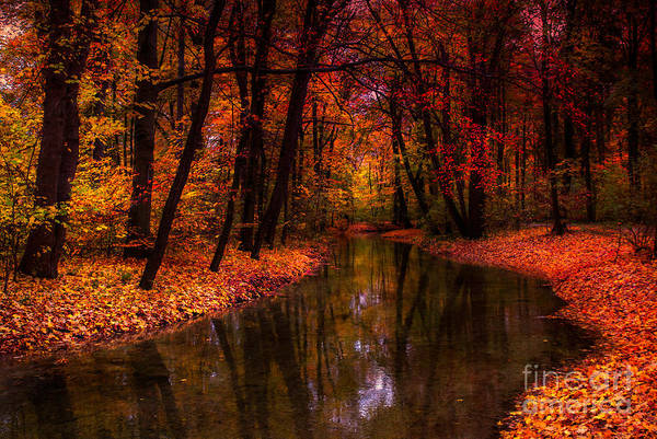 Photograph - Flowing Through The Colors Of Fall by Hannes Cmarits