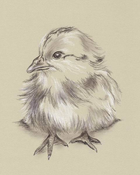 Drawing - Fluffy Barred Rock Chick by MM Anderson