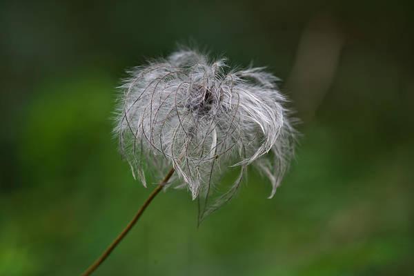 Photograph - Fluffy by Ivan Slosar