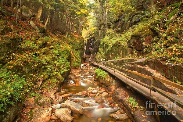 Photograph - Flume Gorge Landscape by Adam Jewell