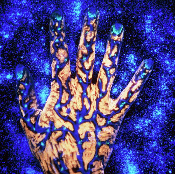 Hand Anatomy Wall Art - Photograph - Fluorescent Ink On Hand by Simon Terrey/science Photo Library